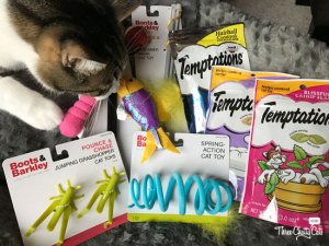 tabby cat sniffing toys