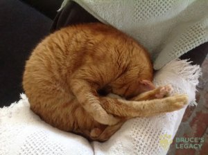 Rocky, ginger cat, from Bruce's Legacy