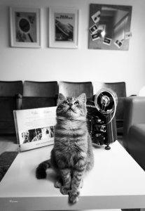 """Videomaker studio cat Romeo   """"C-AT WORK"""" by Marianna Zampieri"""
