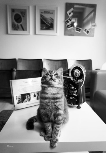 "Videomaker studio cat Romeo | ""C-AT WORK"" by Marianna Zampieri"