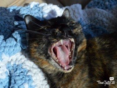 Olive yawning