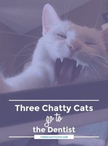 Three Chatty Cats go to the Dentist