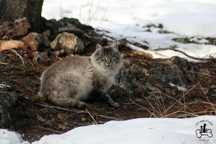 community cat | Lakes Animal Friendship Society