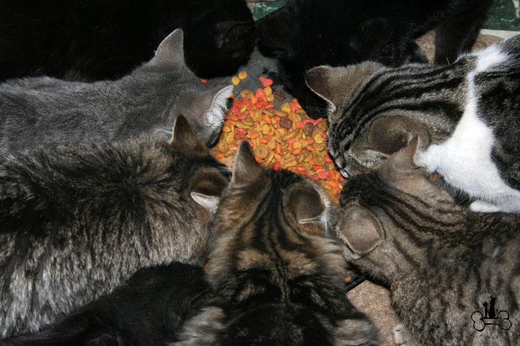 community cats | Lakes Animal Friendship Society