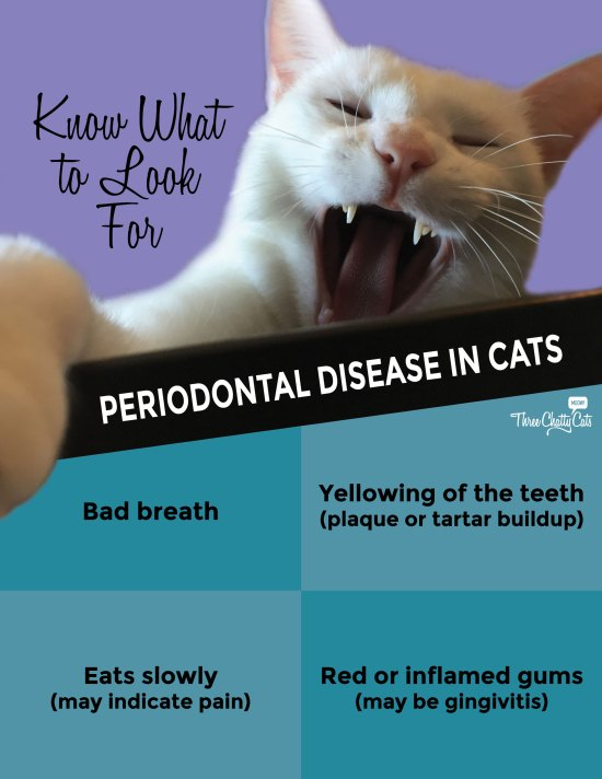 Periodontal Disease in Cats and What to Look For