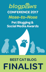 Best Cat Blog Finalist
