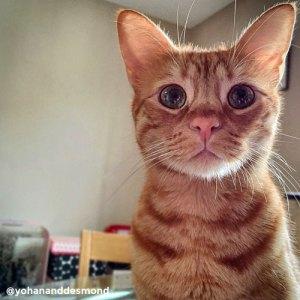 Desmond, ginger cat