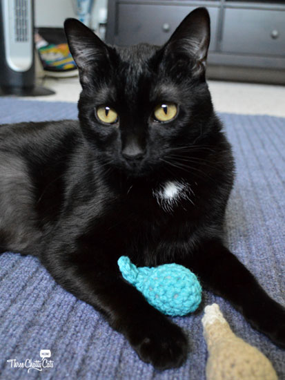 black cat with handmade toys