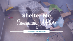 """Shelter Me: Community Matters"""