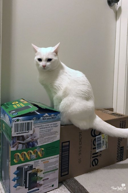 white cat on box