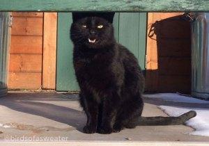 Officer Tom, black cat