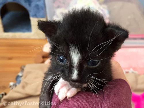 Cathy's Foster Kitties