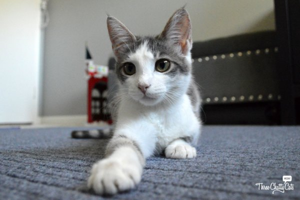 Foster Kitten Hope