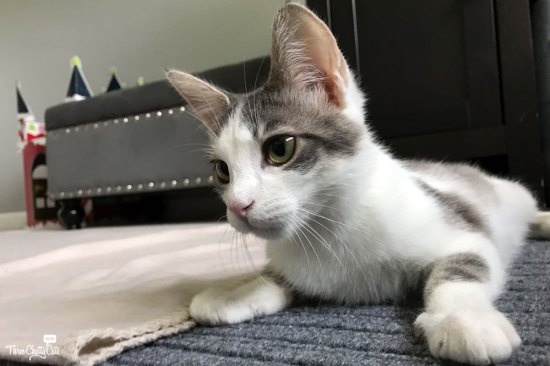 Foster cat Hope