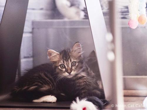 kitten inside Moon Cat Cafe