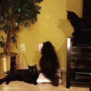 three black cats | Annie Dunn