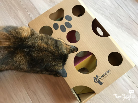 tortie cat with treat maze toy