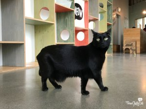 black cat at Catfe