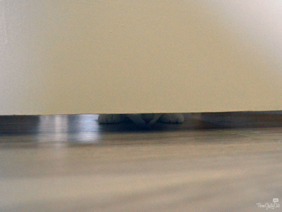 cat looking under door