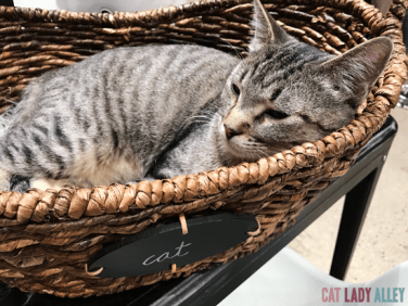 tabby cat in basket