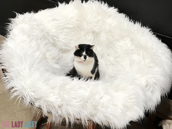 black and white cat in chair