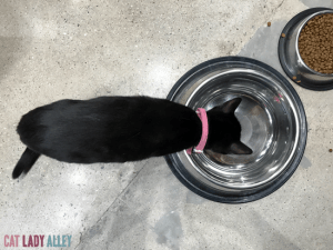 black cat drinking water