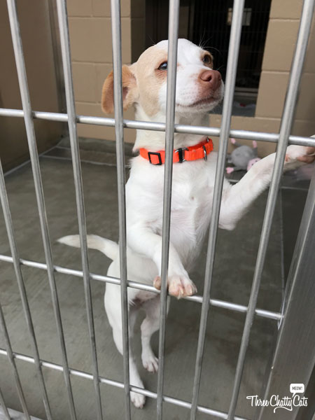 dog at shelter