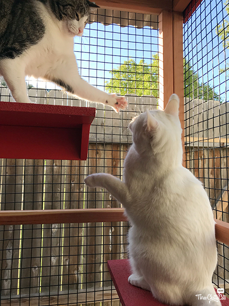 tabby cat and white cat in catio