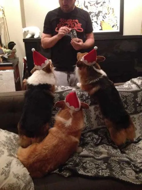 Happy Corgi Holidays!