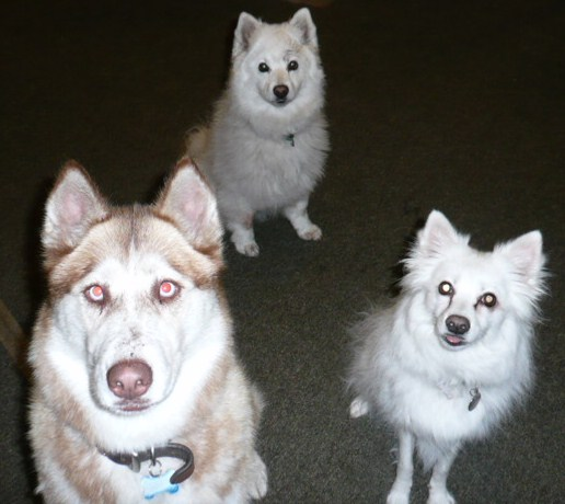 dogs3