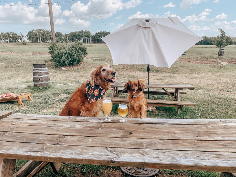 Top Dog-Friendly Breweries, Restaurants and Bars in Austin