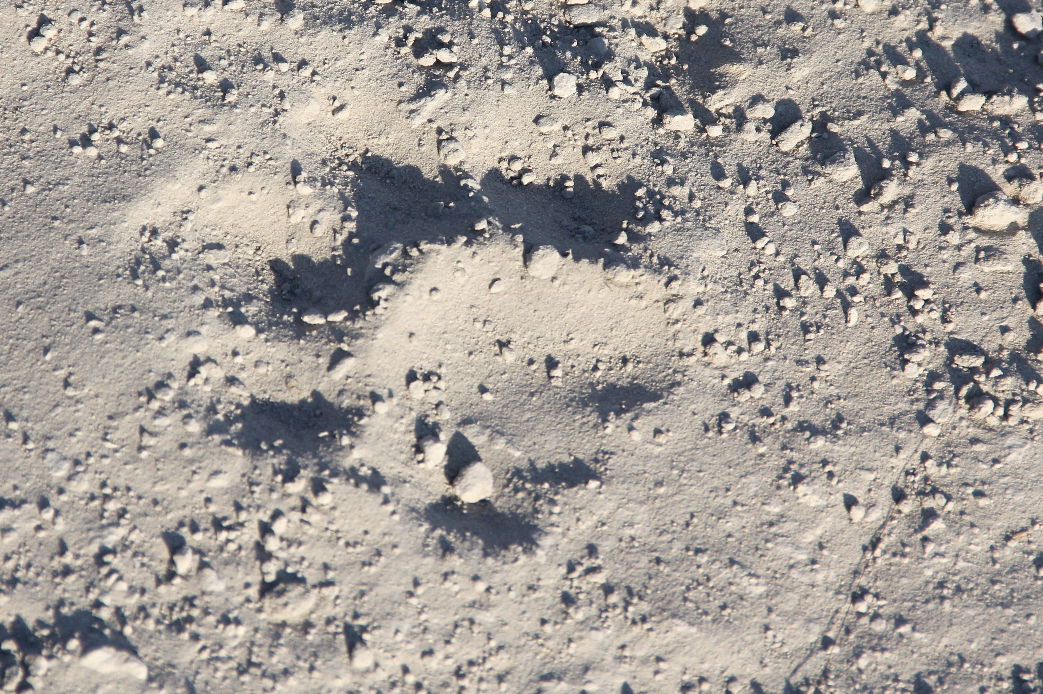 Paw prints in the Delta