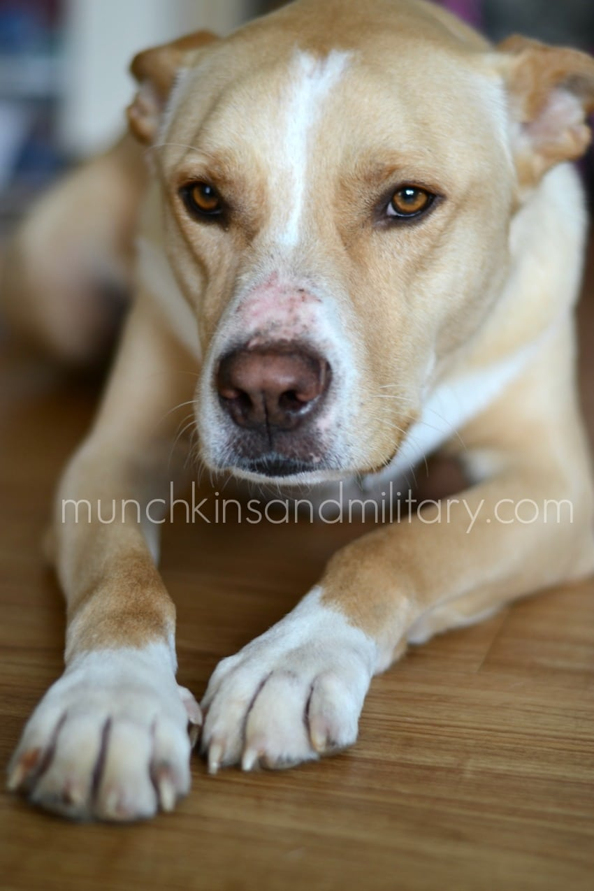 Little Caesar Dog : little, caesar, Three, Little, Ferns, Family, Lifestyle