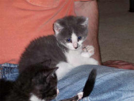 newsletter-1-kitten-1