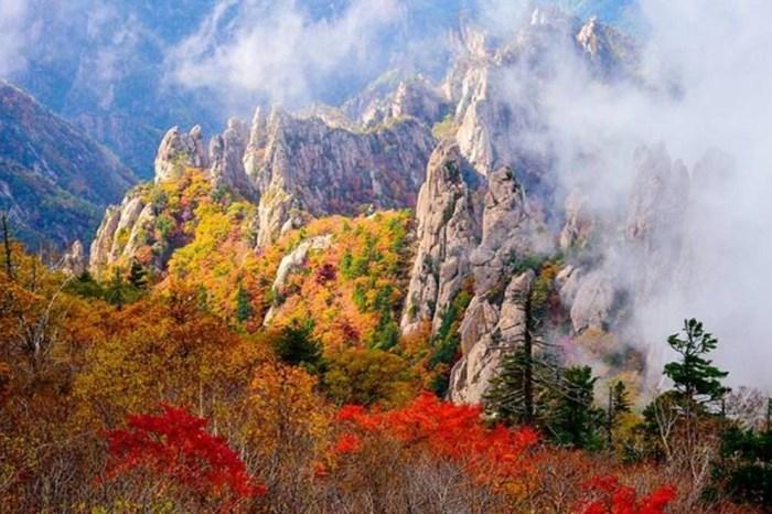 【2020首爾近郊賞楓景點】當秋葉遇上銀杏,首爾近郊賞楓、銀杏必遊!