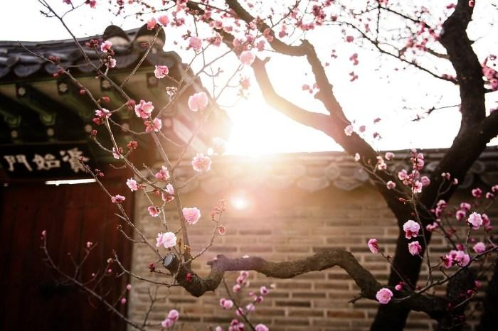 【首爾景點】韓國觀光100選:昌德宮秘苑導覽團預約入園方式