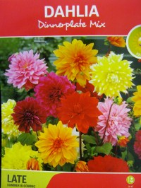 Planting  Dahlia Tubers  MINDING MY P'S WITH Q