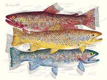 Three Brown Trout