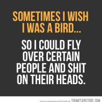 funny-bird-flying-quote.jpg