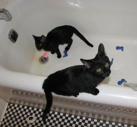small-kittens