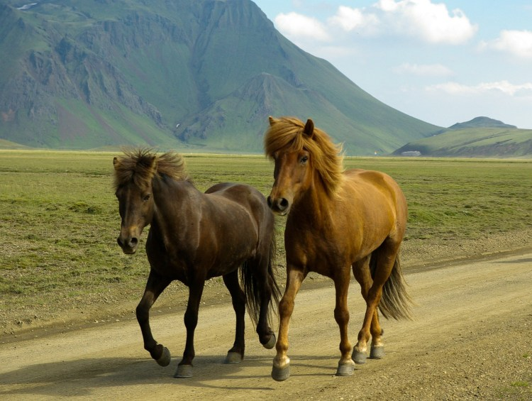 Two horses trotting down a road