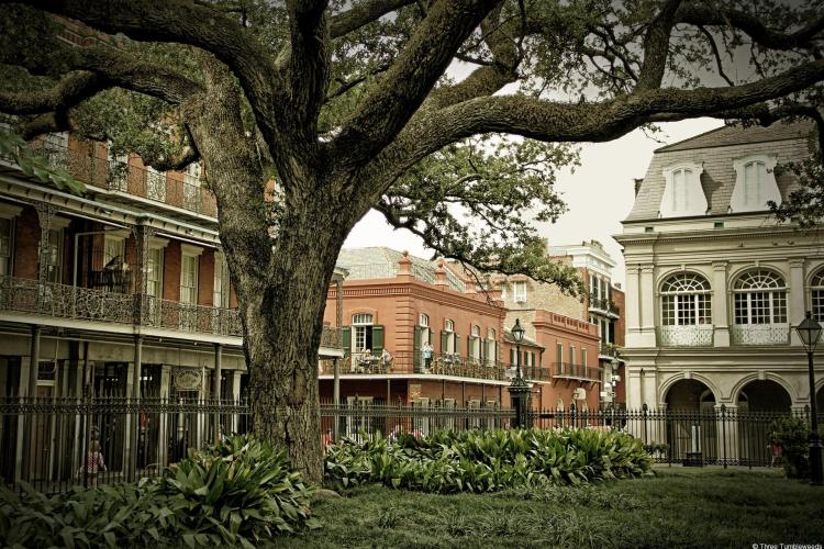 french quarter new orleans large tree in center of french style buildings. top 5 cities