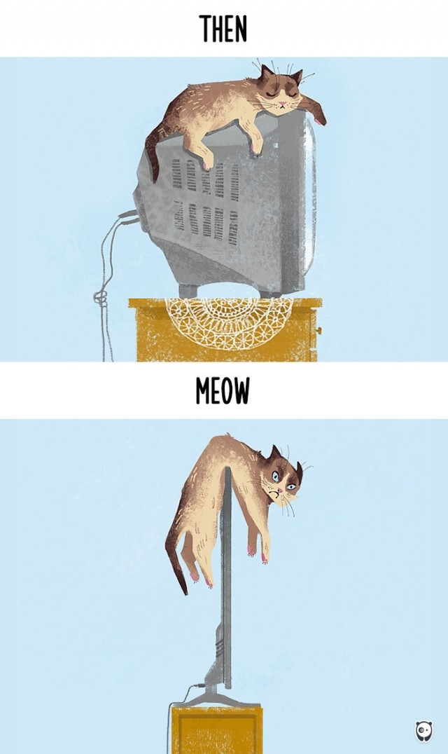 How Cats Have Evolved Into Modern Kids, The Resemblance In The Things They Do Is Un Canny