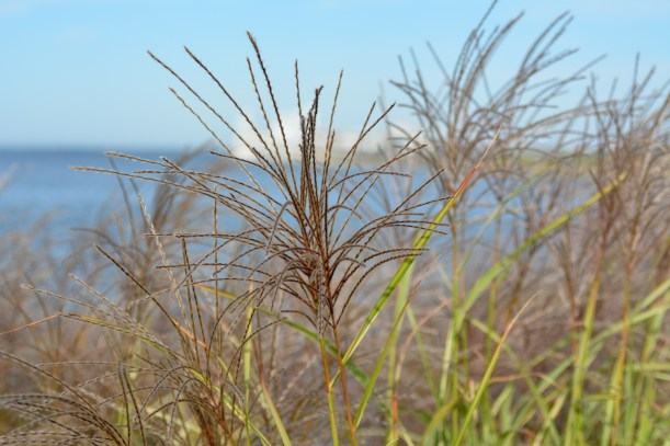Bay Grass Photo by Mike Hartley