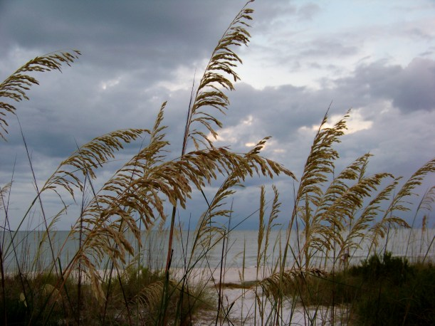 Sanibel Island Fla. Photo by Mike Hartley