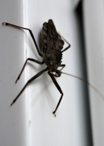 Bug - one of millions gracing my property. Well I should say OUR property. Photo by Mike Hartley