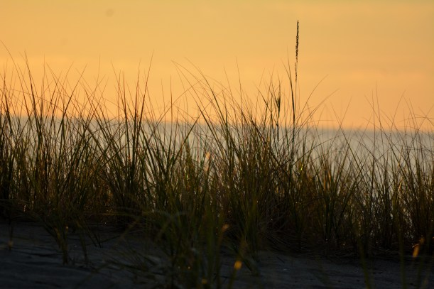 Shore grasses Photo by Mike Hartley