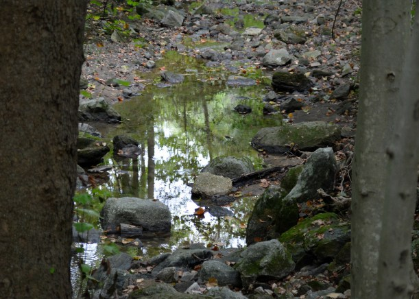 Creek reflection. Photo by Mike Hartley