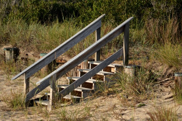 Steps to Where? Photo by Mike Hartley