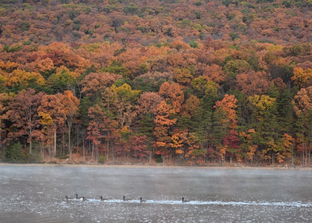 Geese and color Photo by Mike Hartley